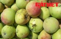 Почему украинцы до сих пор среди лета едят персики из Испании и яблоки из Польши