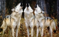 Британскую туристку в Греции загрызли волки