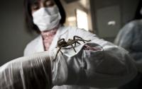 Китай привлечет пауков для борьбы с бедностью