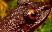 Ученые обнаружили новых животных