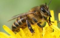 В образцах меда по всему миру найдена большая концентрация инсектицидов