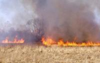 Под Полтавой произошел масштабный пожар