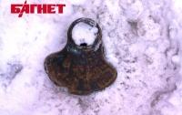 Пейзажная алея снова пострадала от рук вандалов (ФОТО)