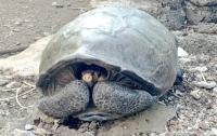 Нашли черепаху, которая вымерла 100 лет назад