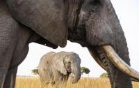 Встреча со слоном стала для туристки фатальной