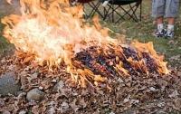 В одной области начали реально штрафовать за сжигание листьев