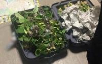 Пограничники задержали партию тропических растений в аэропорту