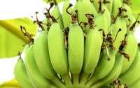 Змея или гроздь бананов: оптическая иллюзия озадачила Сеть