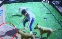 Хозяйка спасла трех собак от смертоносной змеи