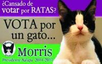 Мексиканский кот баллотировался в мэры