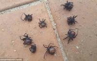 Дождь из пауков шокировал жителей Австралии