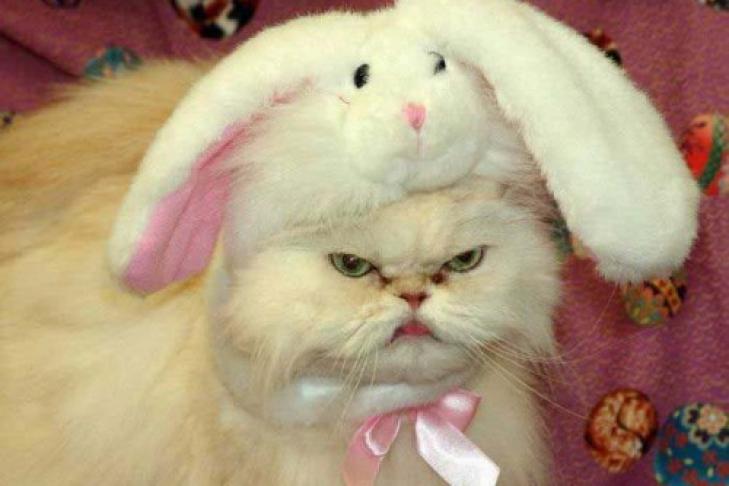 Кот заяц фото
