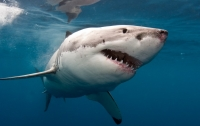 Пьяный канадец искупался с акулами (видео)