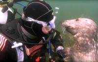 Морской котик поцеловал дайвера в щеку (видео)