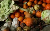 В Украине более 80% агропродукции хранится с нарушениями