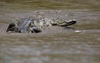 Крокодилы напали на лодку с туристами в Зимбабве