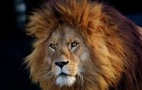 Львы напали на работника зоопарка