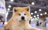 Забавный японский пес попал на Google Maps