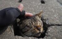 Японские кошки нашли применение асфальту (фото)