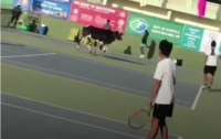 Корова вышла на теннисный корт во время соревнований (видео)