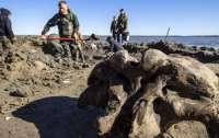 В озере на Ямале нашли трехметрового мамонта