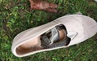 Змея пробралась в ботинок пассажирки и пролетела полмира