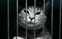 Украинские заключенные смогут содержать в камерах домашних животных