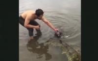 В Австралии мужчина вытащил из реки тонущую коалу (ВИДЕО)