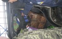 Таможенники задержали на границе крокодила (ФОТО)