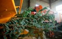 Где в Киеве можно сдать елку на переработку: список адресов