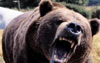 Ради уникальной съемки россиянин готов был быть съеденным медведем (видео)