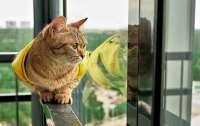 Влюбленный кот отказался отпускать кошку (видео)