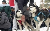 На Харьковщине собаки бегали наперегонки