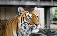 В США полицейские застрелили цирковую тигрицу