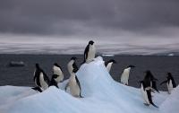 Благодаря снимкам из космоса нашли огромную колонию пингвинов