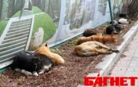 В Киеве ядом для бездомных животных отравился и едва не умер ребенок