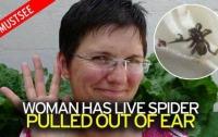 Причиной головных болей у женщины стал поселившийся в ухе паук