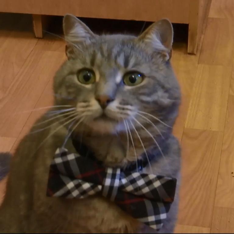 В Черновцах на работу спикера предприятия приняли кота