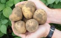 Китайці спробують виростити картоплю на Місяці