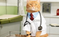 Названы домашние питомцы – лекари опасных болезней
