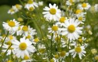 10 природных антисептиков