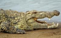 Крокодил две недели «партизанил» в секторе Газа