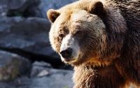 Мужчина откусил напавшему на него медведю язык