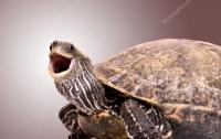 Черепаха, атакующая собственное отражение,