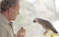 В Праге попугай продает страховые полисы для животных (видео)