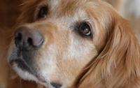 В Кропивницком женщина массово травила бездомных животных