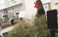 Американка вернула после праздников деньги за осыпавшуюся елку