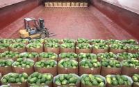 Херсонские дыни и арбузы приплывут в Киев по Днепру