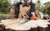 Мужчина незаконно рубил лес и случайно убил товарища