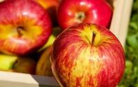 Кому нельзя есть яблоки